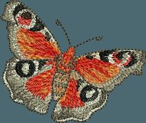 OESD Butterfly